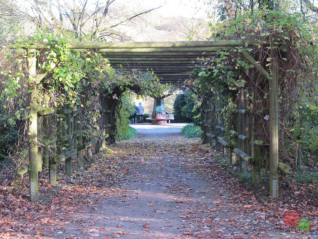 Rombergpark12