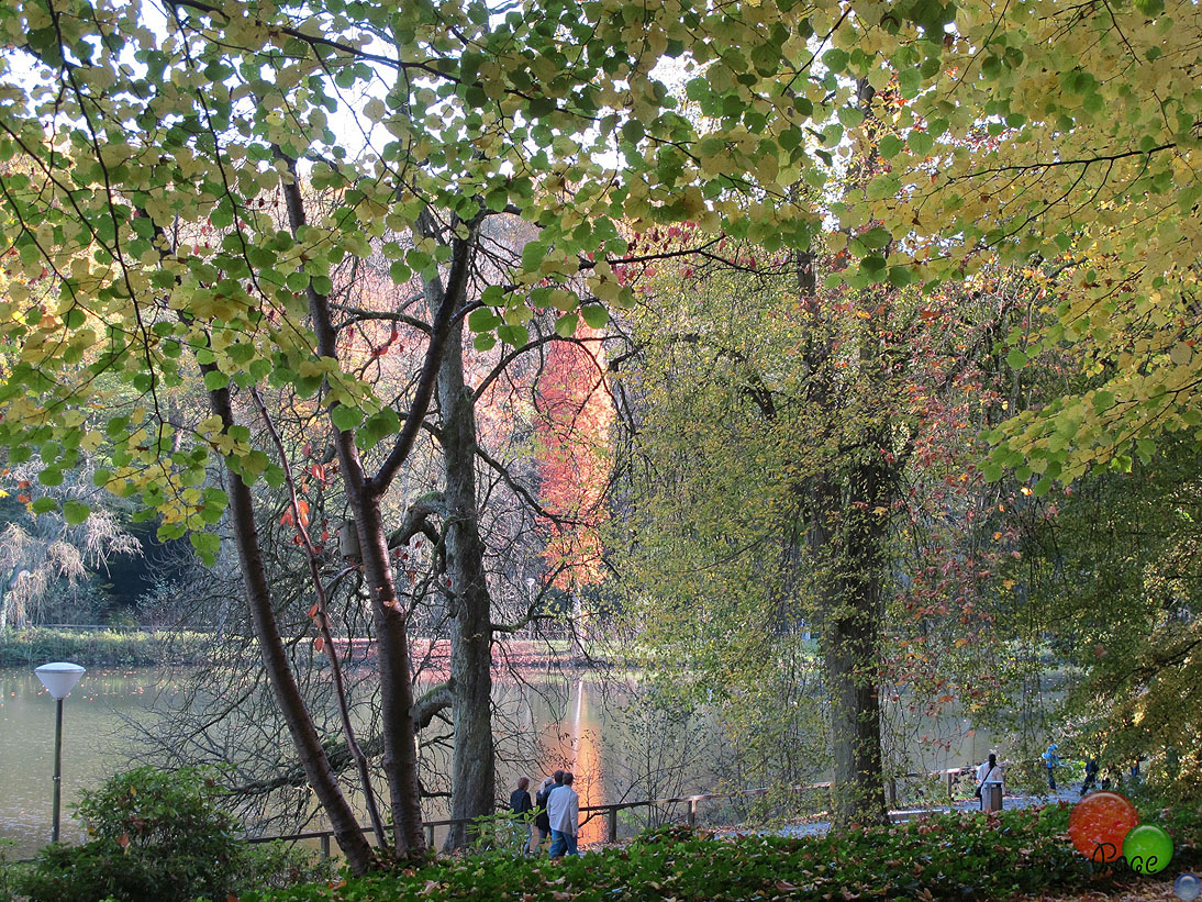 Rombergpark2