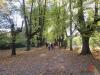 Rombergpark4