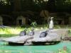 zoo-ausflug17