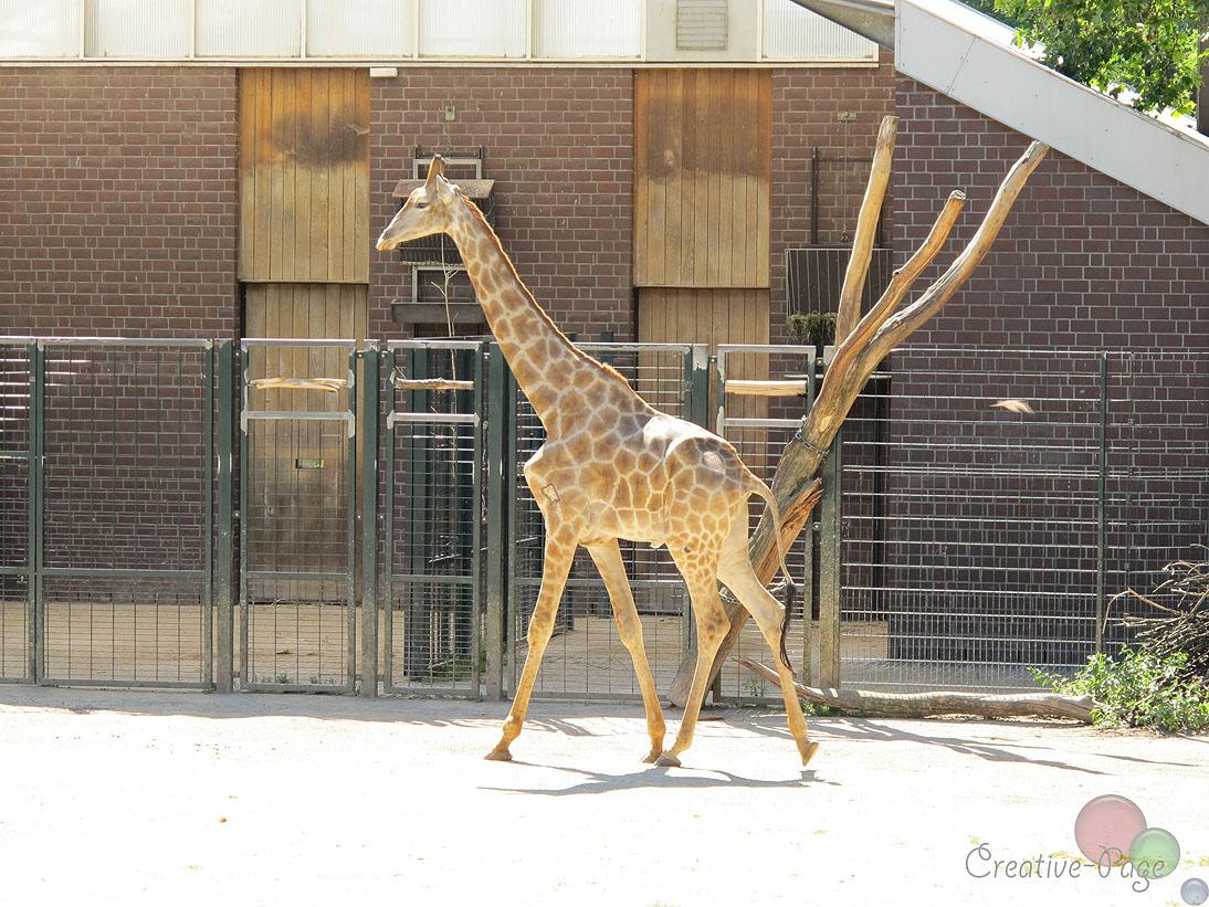 zoo-ausflug12
