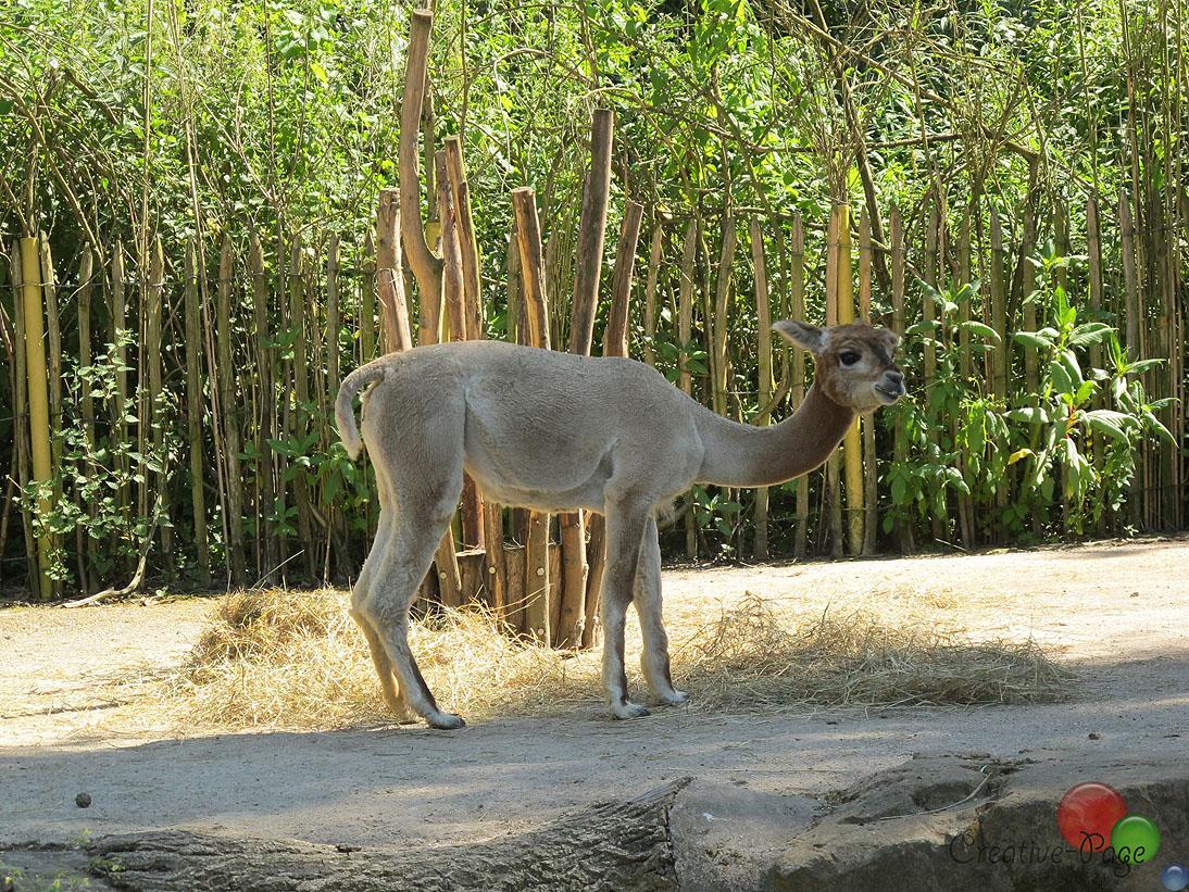 zoo-ausflug13