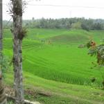 Bali-Reisterrasse