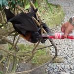 Fledermäuse mögen Cola!