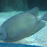 SeaLife-Oberhausen